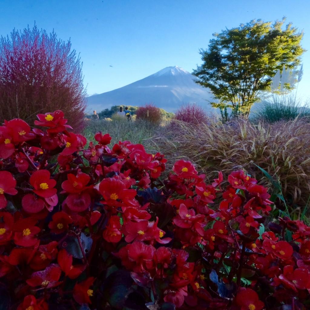 Mt Fuji, Yamanashi, Japan